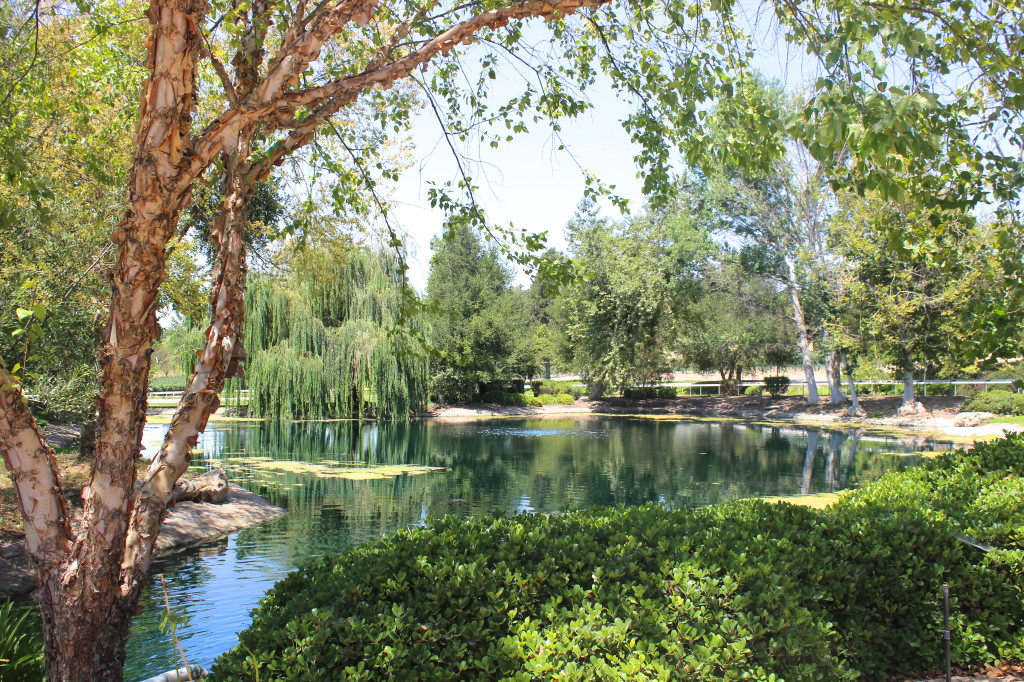 Bridlewood Winery grounds | Wander & Wine