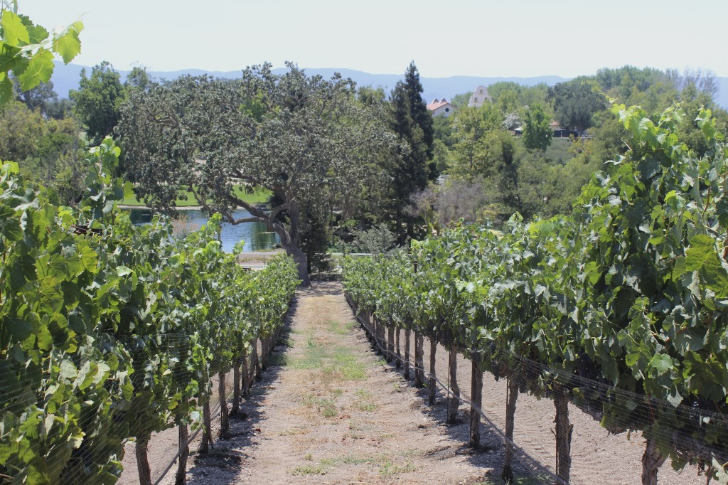 Vineyards | Wander & Wine