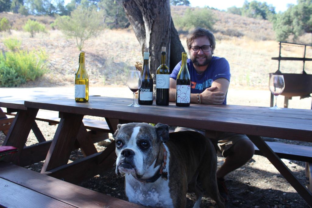 Winery dog - Storm Wines | Wander & Wine