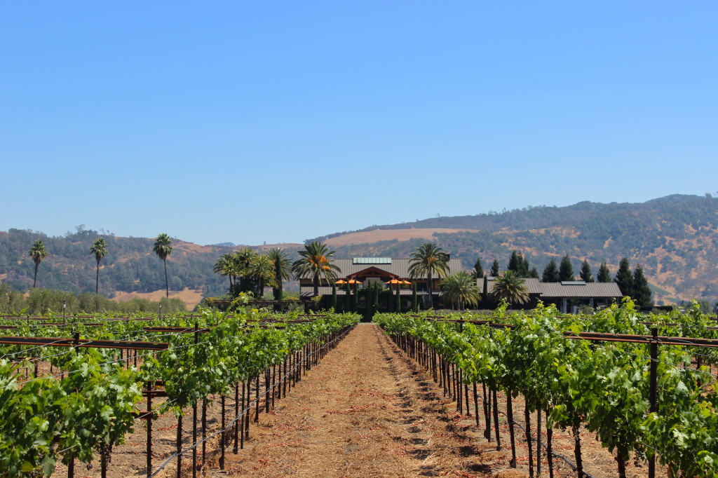 Round Pond Winery vineyards | Wander & Wine