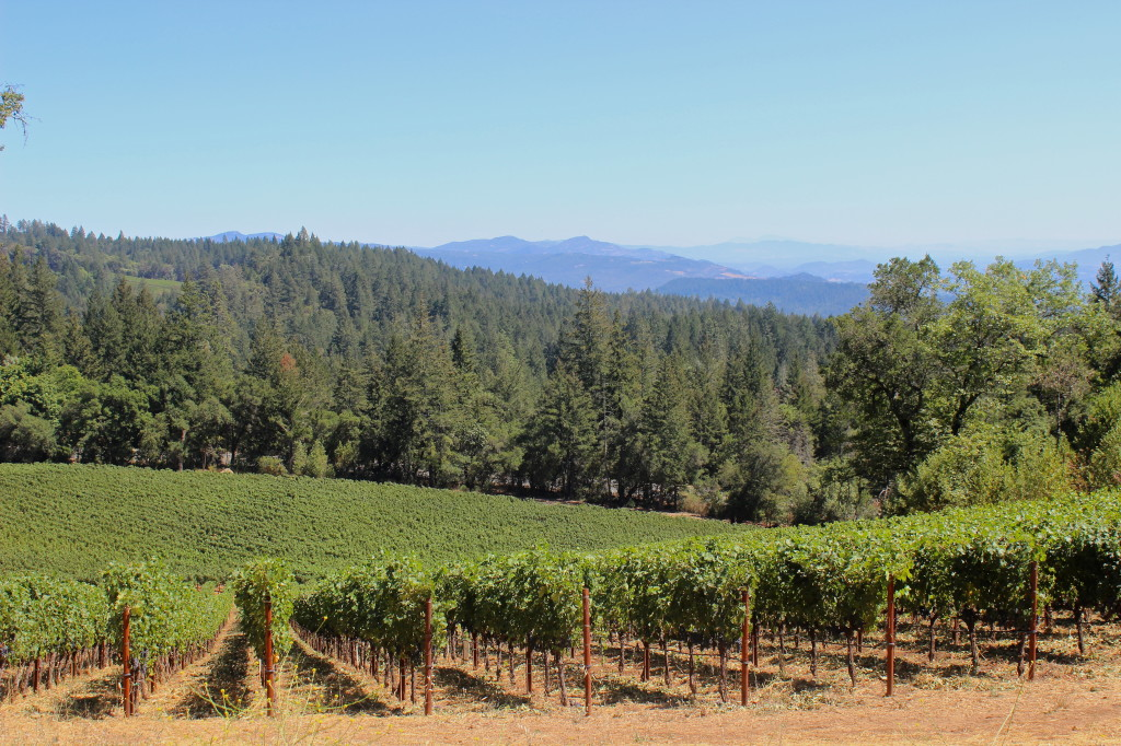 Views from CADE winery on Howell Mountain | Wander & Wine