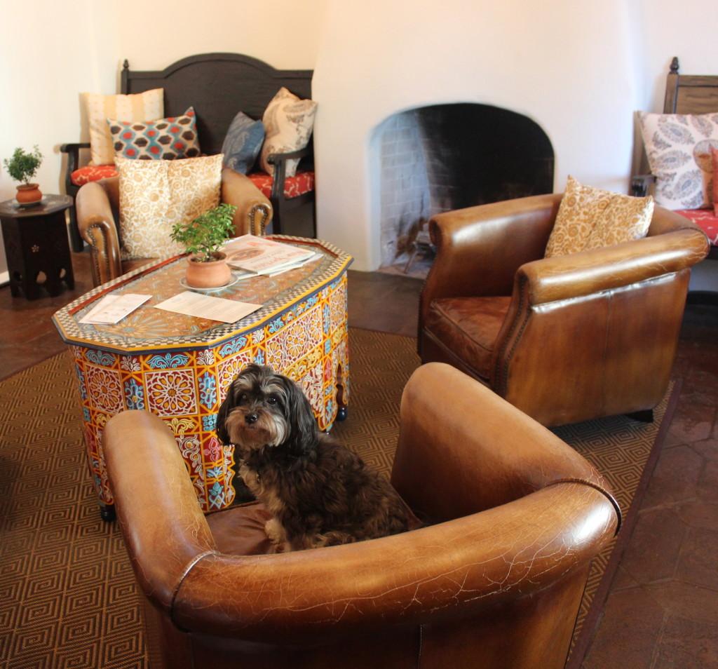 Sophie the dog, Jamie Slone Wines | Wander & Wine