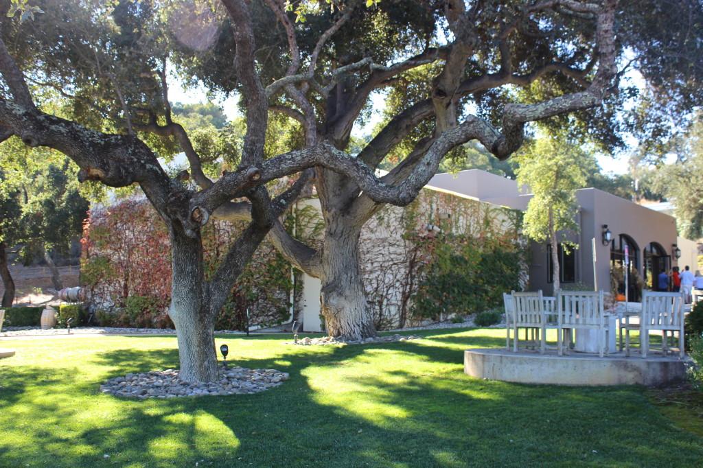 Andrew Murray Vineyards, Santa Ynez | Wander & Wine