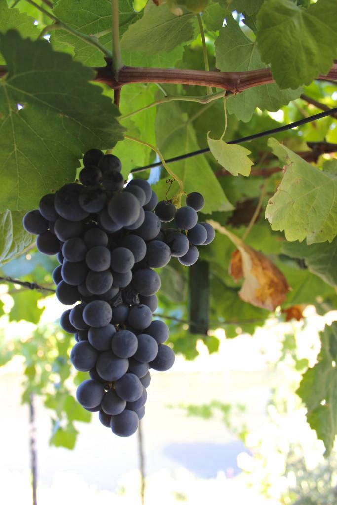 Common Wine Tasting Terms | Wander & Wine