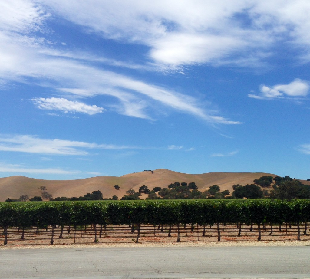 Guide to Santa Barbara AVA's | Wander & Wine
