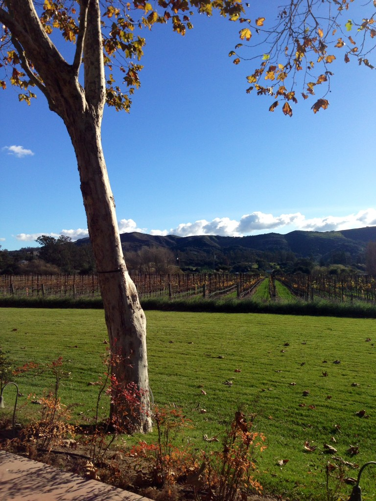 Guide to the AVAs of Santa Barbara's Wine Country | Wander & Wine
