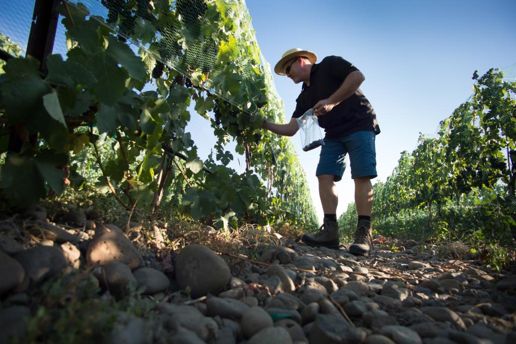 Q&A with Richard Funk of Saviah Cellars | Wander & Wine