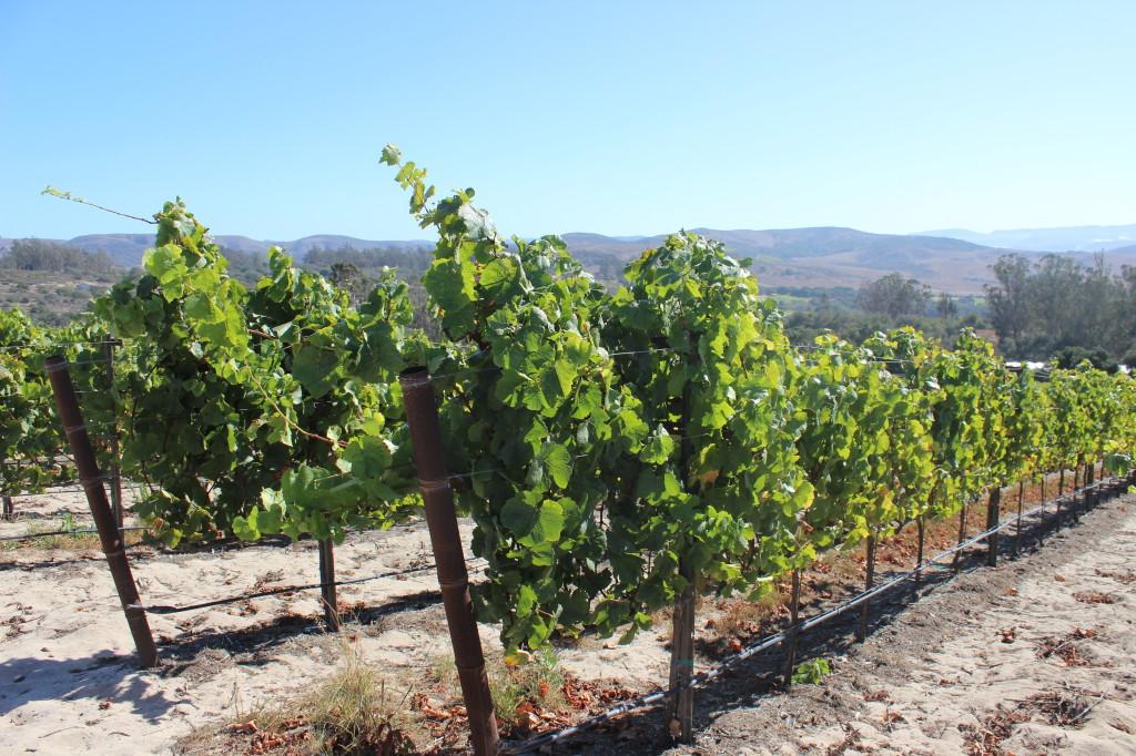 Cebada Winery | Wander & Wine