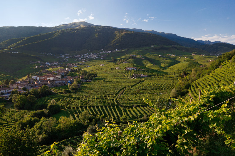 Sorelle Bronca vineyards, Italy | Wander & Wine