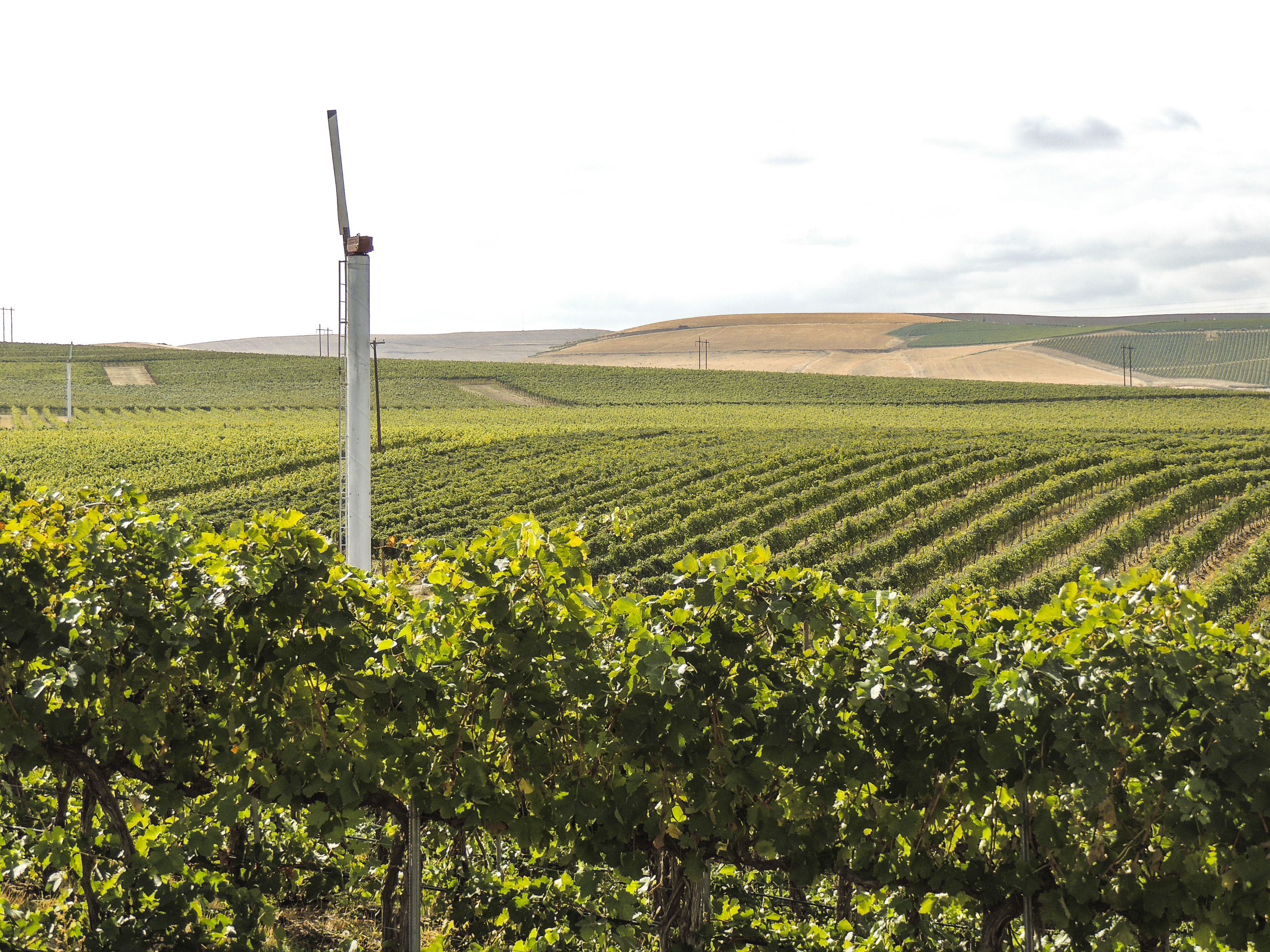 Seven Hills Vineyard *Where to Eat, Drink and Stay in Walla Walla | Wander & Wine