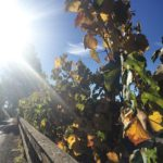 Good morning from Sonoma! Fall is in the air athellip