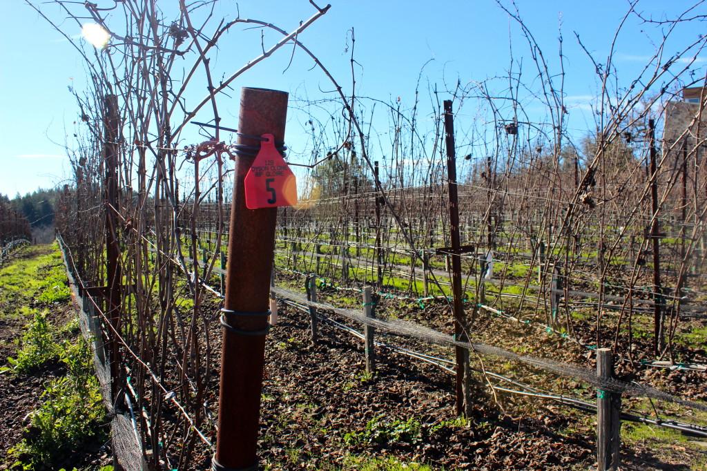 Williams Selyem Winery - Healdsburg | Wander & Wine