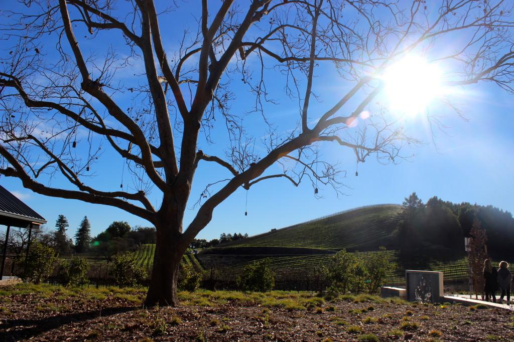 MacRostie Winery - Healdsburg, CA | Wander & Wine