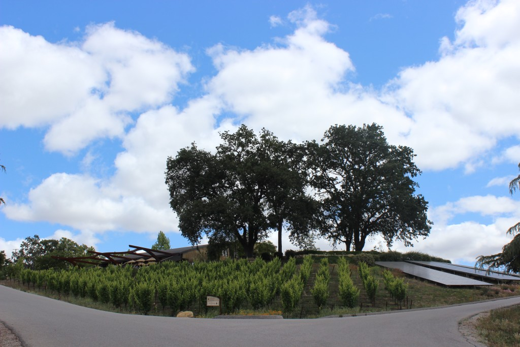 Denner Winery, Paso Robles | Wander & Wine