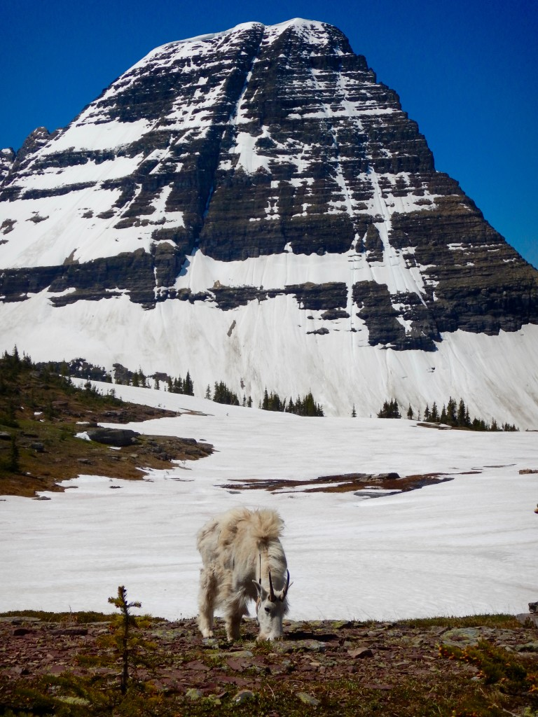 Snapshots of Glacier National Park, Montana | Wander & Wine