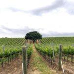 Vineyard views never get old sbcwine