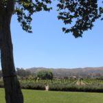 Melville Winery, Sta. Rita Hills - Santa Barbara | Wander & Wine