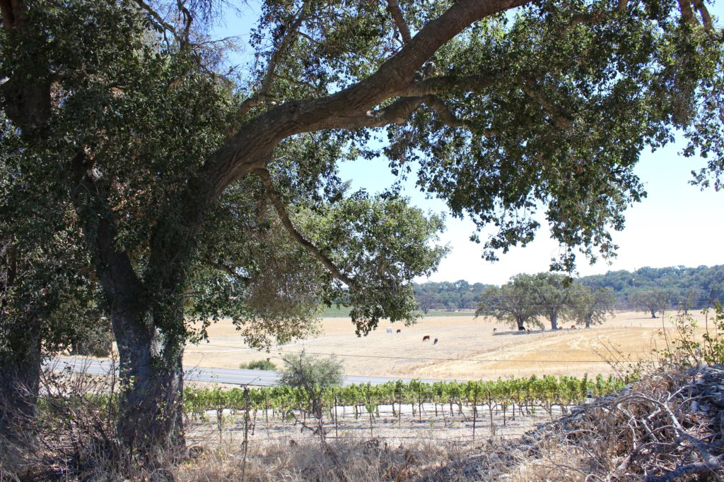 Guide to Paso Robles Wineries | Wander & Wine