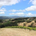 The Ultimate Guide to Paso Robles Wineries   Wander & Wine