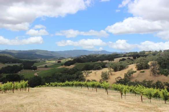 The Ultimate Guide to Paso Robles Wineries | Wander & Wine