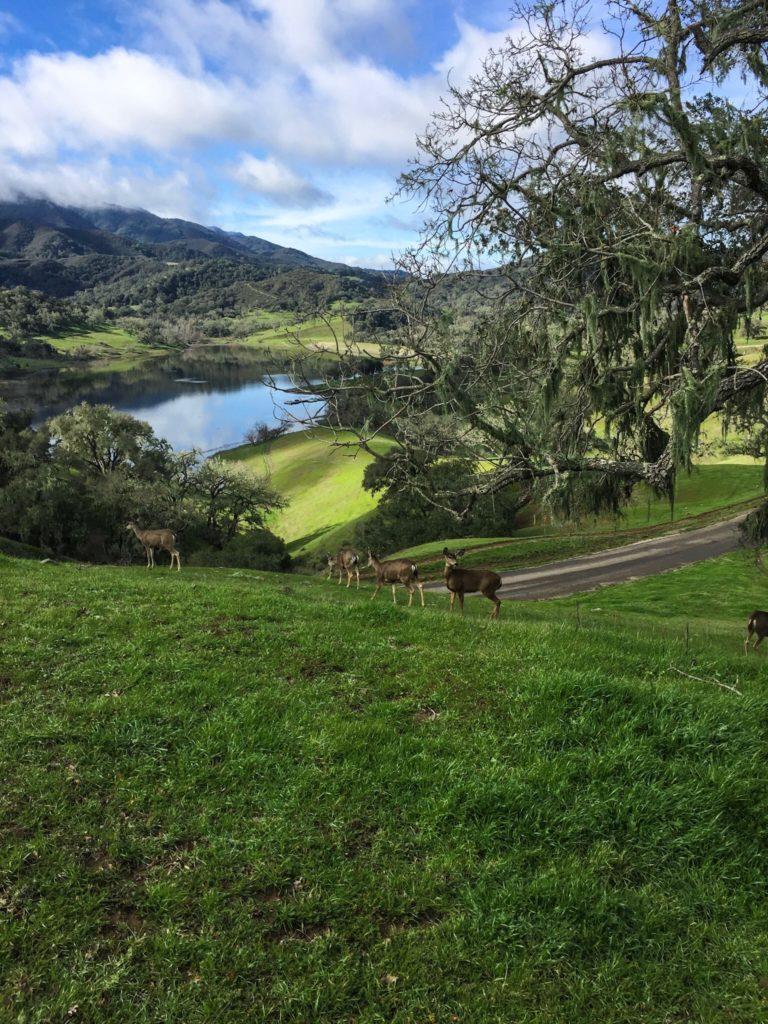 The Alisal Ranch, Santa Ynez Valley | Wander & Wine