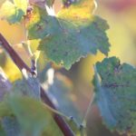 Fall in Wine Country Love this time of year forhellip