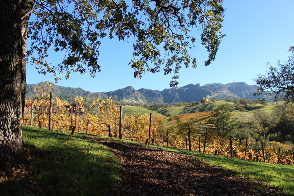 Vineyard views at Jericho Canyon