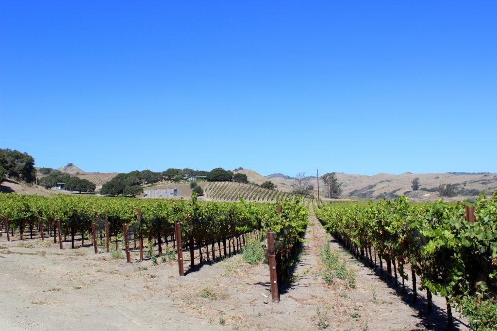 Strange Family Vineyards   Wander & Wine